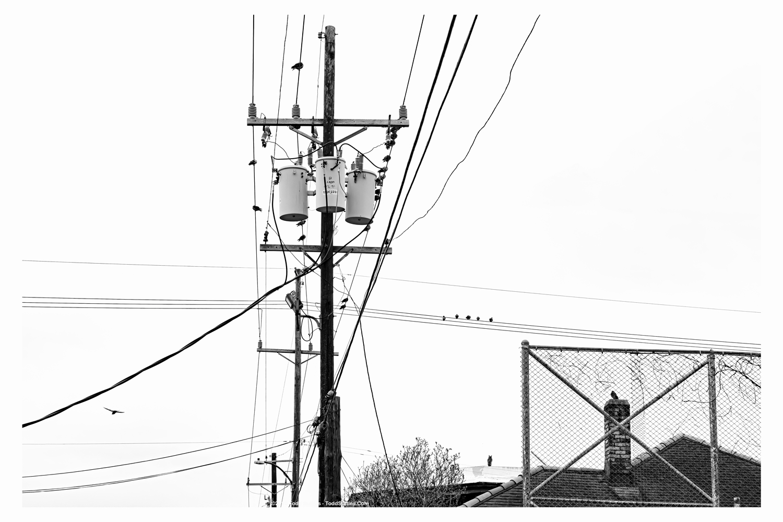 JOBID-191012-01-BIRDS_10x15_78A2590-Border_wm
